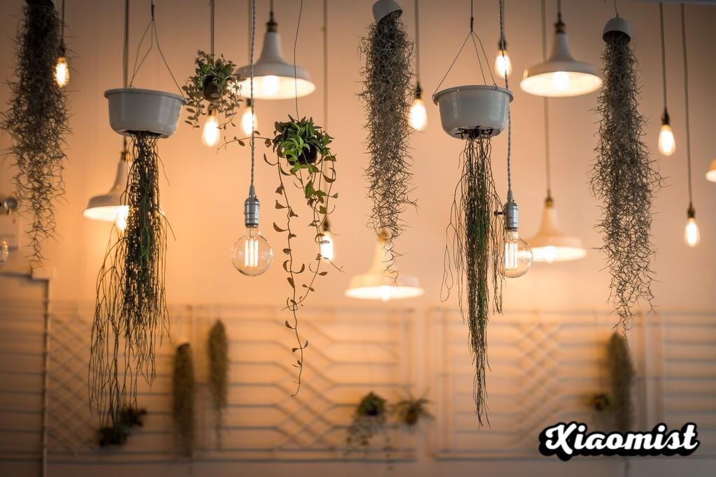Growing a plant with artificial light is possible if you know how: the mega-guide to LED lighting for indoor plants